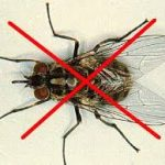 Những mầm bệnh nguy hiểm mà loài ruồi gây ra cho con người