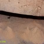 Công ty diệt mọt gỗ – Diệt mọt tận gốc