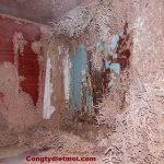 Những khu vực trong nhà bạn dễ bị mối xông? Cách phòng chống mối