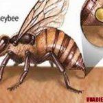 Các biện pháp phòng tránh và cách sơ cứu khi bị ong đốt