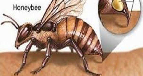cach-so-cuu-khi-bi-ong-dot