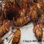 Dịch vụ phun thuốc diệt gián tại Đồng Nai