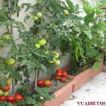 Những loại cây trồng xua đuổi côn trùng hiệu quả