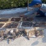 Công ty diệt chuột tại Bình Thuận