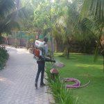 Công ty phun thuốc diệt muỗi tại quận Gò Vấp – TP HCM