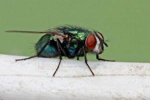 Dịch vụ diệt ruồi tại Bà Rịa - Vũng Tàu