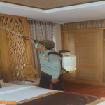 Dịch vụ diệt mối tại Thái Bình
