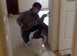 Dịch vụ diệt kiến tại thủ đô Hà Nội