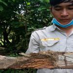 Dịch vụ diệt mối tận gốc – Trừ mối tại Bắc Giang