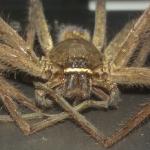 Công ty kiểm soát nhện – Diệt nhện trong nhà xưởng