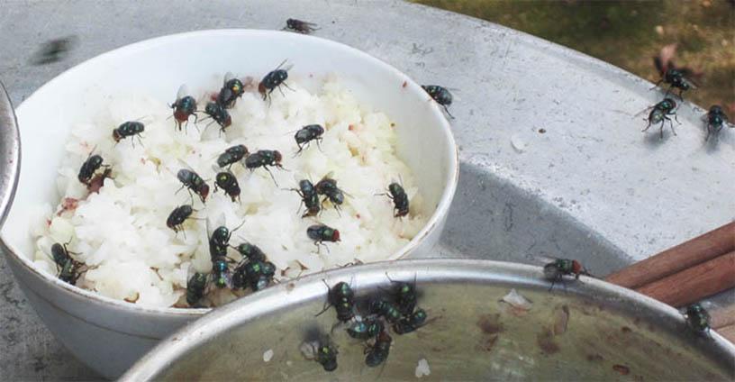 diệt ruồi tận gốc tại Hà Nội