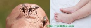Dịch vụ diệt muỗi tận gốc Cần Thơ