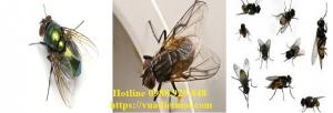 Dịch vụ diệt ruồi tận gốc tại Cần Thơ