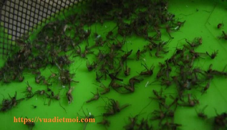 Dịch vụ phun diệt muỗi tận gốc Hà Nội