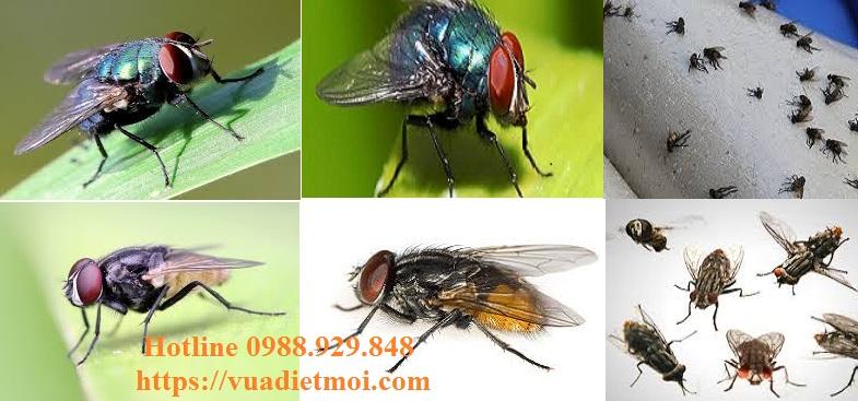 Đơn vị diệt ruồi tận gốc tại Đà Nẵng