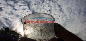 Dịch vụ diệt muỗi tận gốc Bình Dương