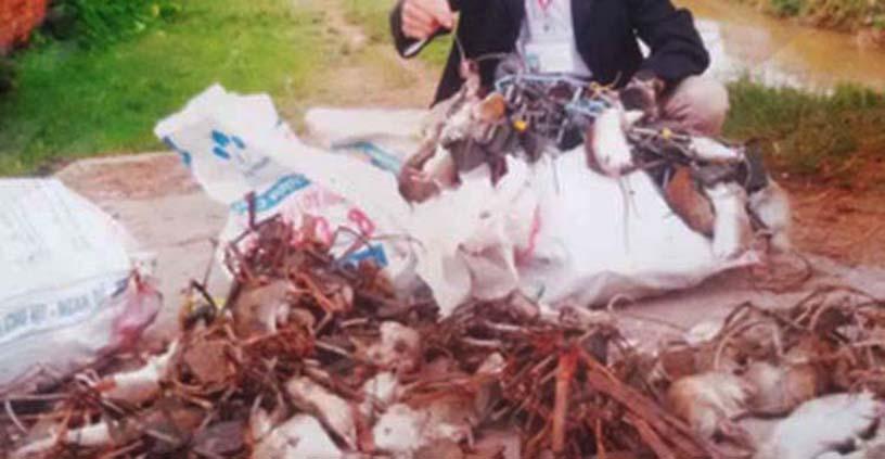 dịch vụ diệt chuột Tây Ninh
