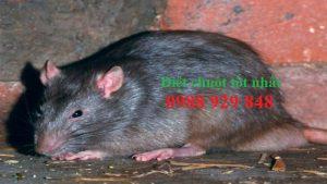 Đơn vị diệt chuột giá rẻ Bắc Giang