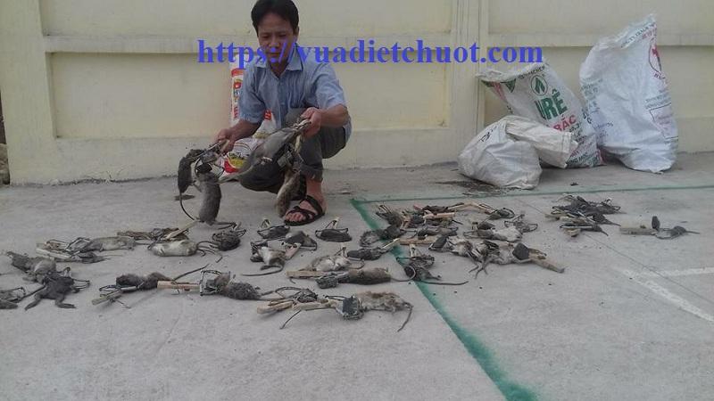 Dịch vụ diệt chuột Hưng Yên