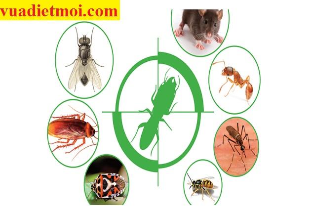 Dịch vụ xử lý côn trùng gây hại tại Hòa Bình