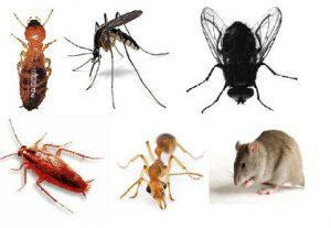 Công ty phun diệt côn trùng chất lượng hàng đầu tại Đắk Lắk