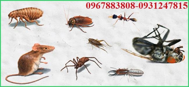 Công ty Đại Việt chuyên nhận các dịch vụ kiểm soát côn trùng tai Lào Cai