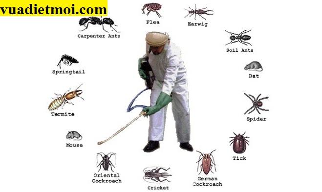 Công ty Đại Việt nhận các dịch vụ diệt trừ côn trùng gây hại tại Ninh Thuận