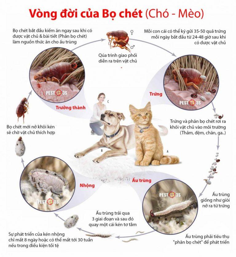 diệt bọ chét tại Hà Nội