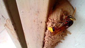 bắt tổ ong tại Đồng Nai