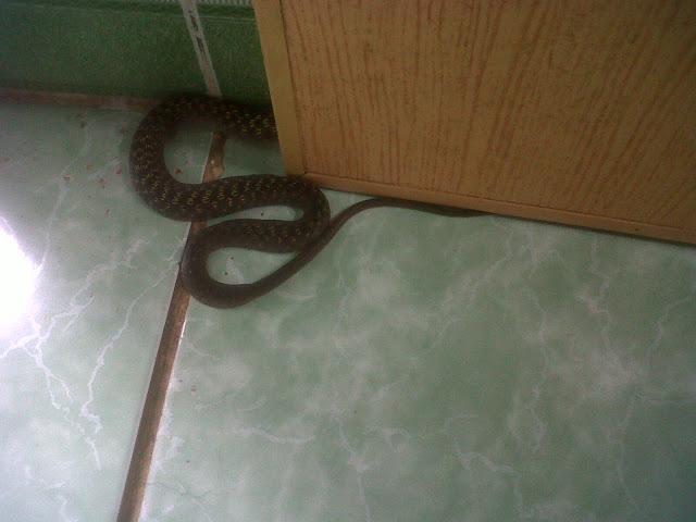 vì sao rắn hay bò vào nhà